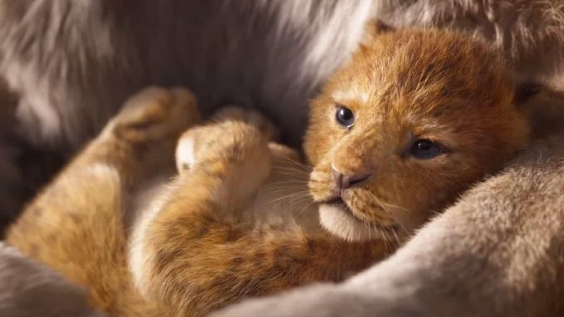 Crítica O Rei Leão, O Rei Leão, O Rei Leão remake, O Rei Leão 2019, Delfos